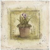 Tulipes Violettes