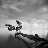 L'arbre et l'eau Reproduction d'art par Moises Levy