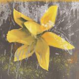 Tulip Fresco (yellow)