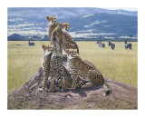 Cheetah Watch