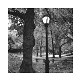 Light in Central Park
