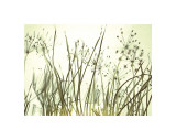 Watery Grasses III