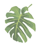 Philodendron I