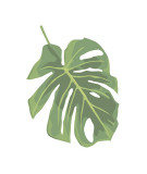 Philodendron II