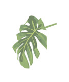 Philodendron III