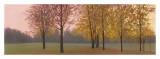 Autumn Dawn  Maples