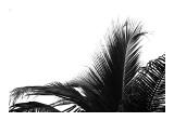 Palms  no 2