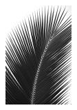 Palms  no 14