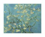 Branches d'amandier en fleurs, Saint-Rémy, 1890 Giclée par Vincent Van Gogh