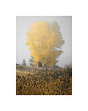 Yellow Tree and Teasel