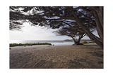 Shaded Beach  Carmel by the Sea  California