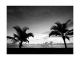 Two Palms BW