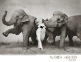 Dovima et les éléphants, vers 1955 Reproduction d'art par Richard Avedon