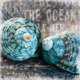 Blue Ocean Shells