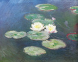 Water Lilies  Effects at the Evening