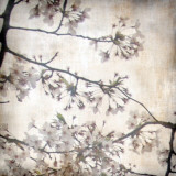 Cherry Blossom Tree VI