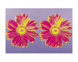 Daisy  c1982 (Double Pink)