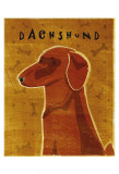 Dachshund (red)