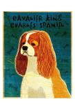 Cavalier King Charles (blenheim)
