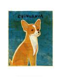 Chihuahua (red)