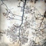Cherry Blossom Tree V