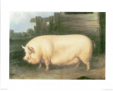 Pig III