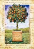 Fruti Mediterranei I