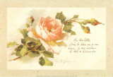 Ma Chère Colette
