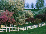 Flowering Crab Apple Trees Bloom on Manchester Farm&#39;s Grounds