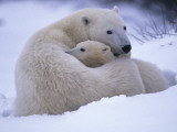 A Mother Polar Bear and Her Cub