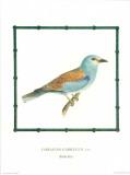 Ornitologica III