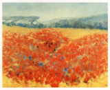 Poppy Field in Provence