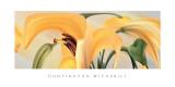 Lilies  no 14