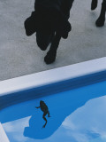 A Pet Dog Looks Curiously at a Frog in a Swimming Pool