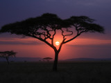 Sunset with Acacia Tree