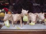 A Restaurant Displays its Specialty  Roast Suckling Pig