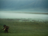 An African Elephant in the Ngorongoro Crater