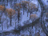 Trees Tipped with Sunlight in Snow-Covered Central Park