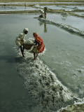 Workers Haul Salt from Evaporation Pans to Be Used in Chemicals