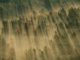 Aerial View of Autumn-Hued Forest with Morning Fog