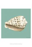 Shell on Aqua II