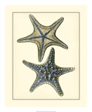 Antique Blue Starfish II