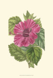 Antique Hibiscus II