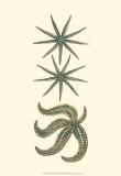 Aquamarine Starfish II