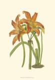 Lily Varieties IV