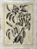 Embellished Antique Foliage III