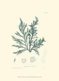 Nature Print in Aqua I