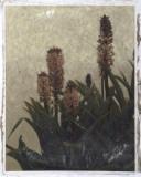 Pineapple Plant I