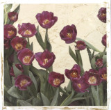 Spring Tulips I