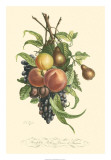 Plentiful Fruits I